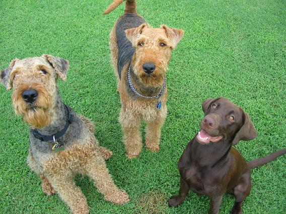 Chester, Lara und Kona