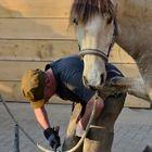 cheval au ferrage