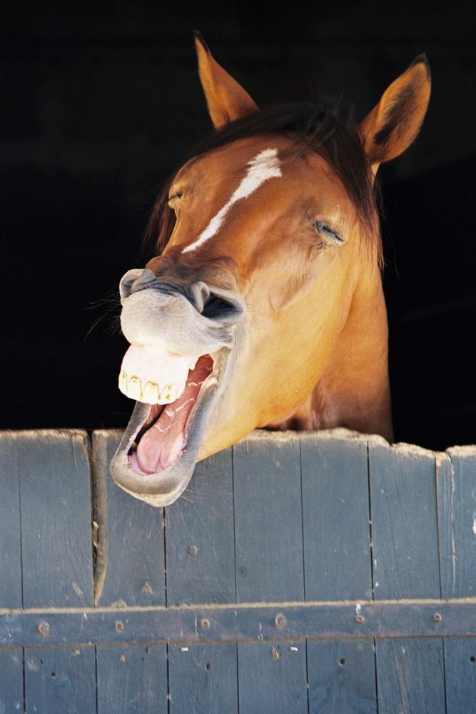image cheval qui rit