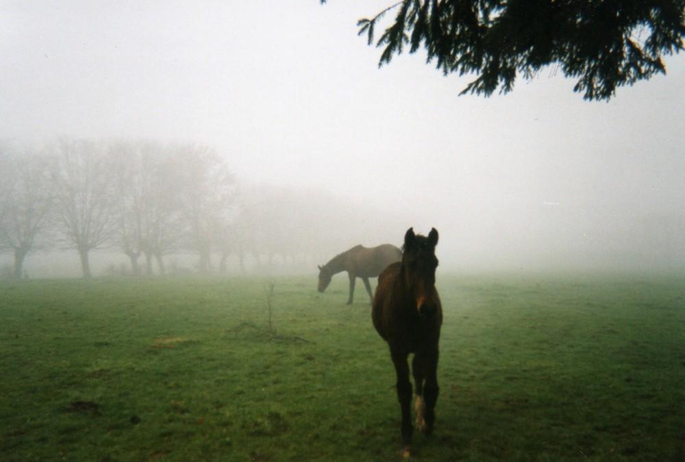 chevaux dans la brume