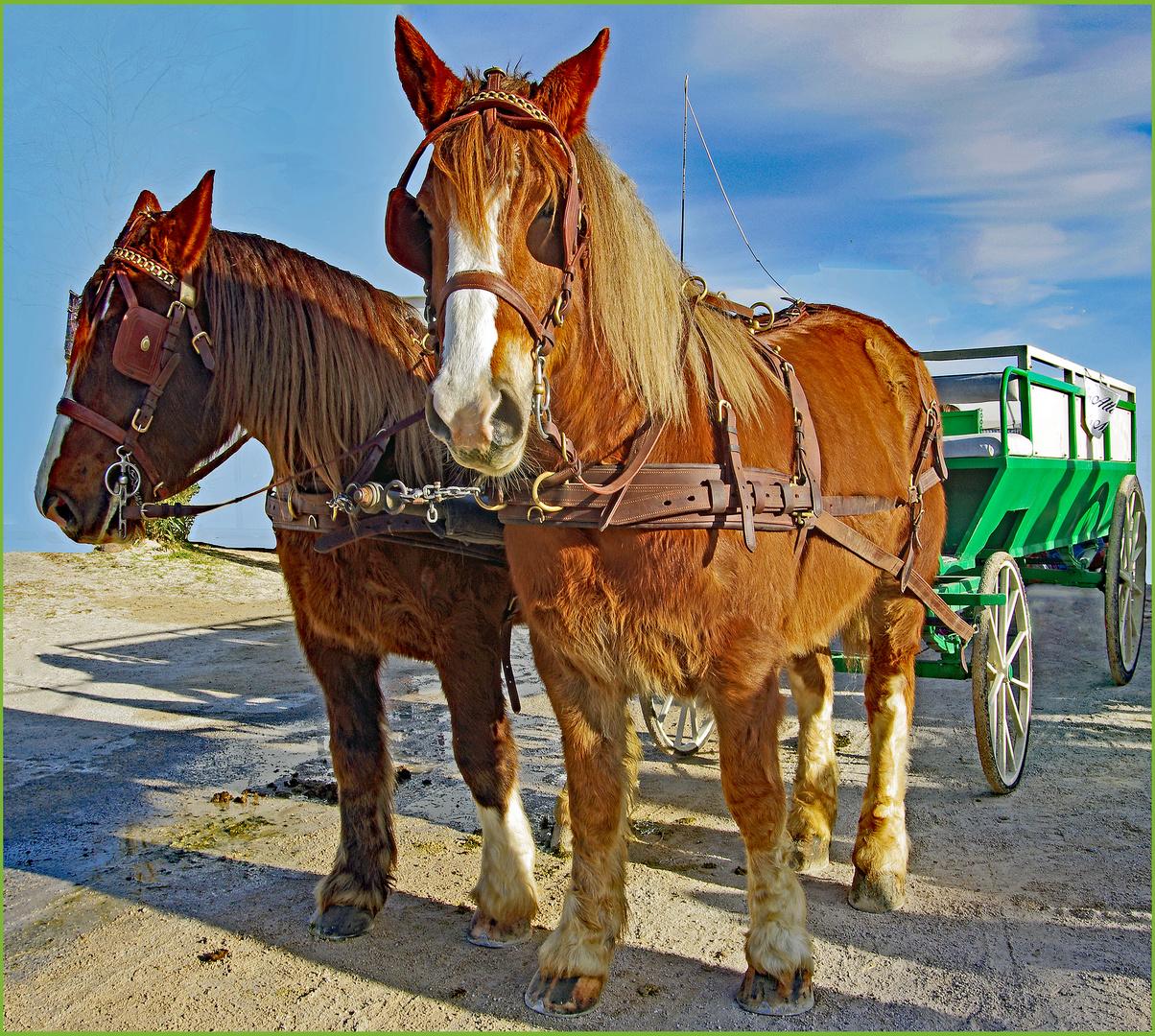 chevaux de Trait et voiture Verte