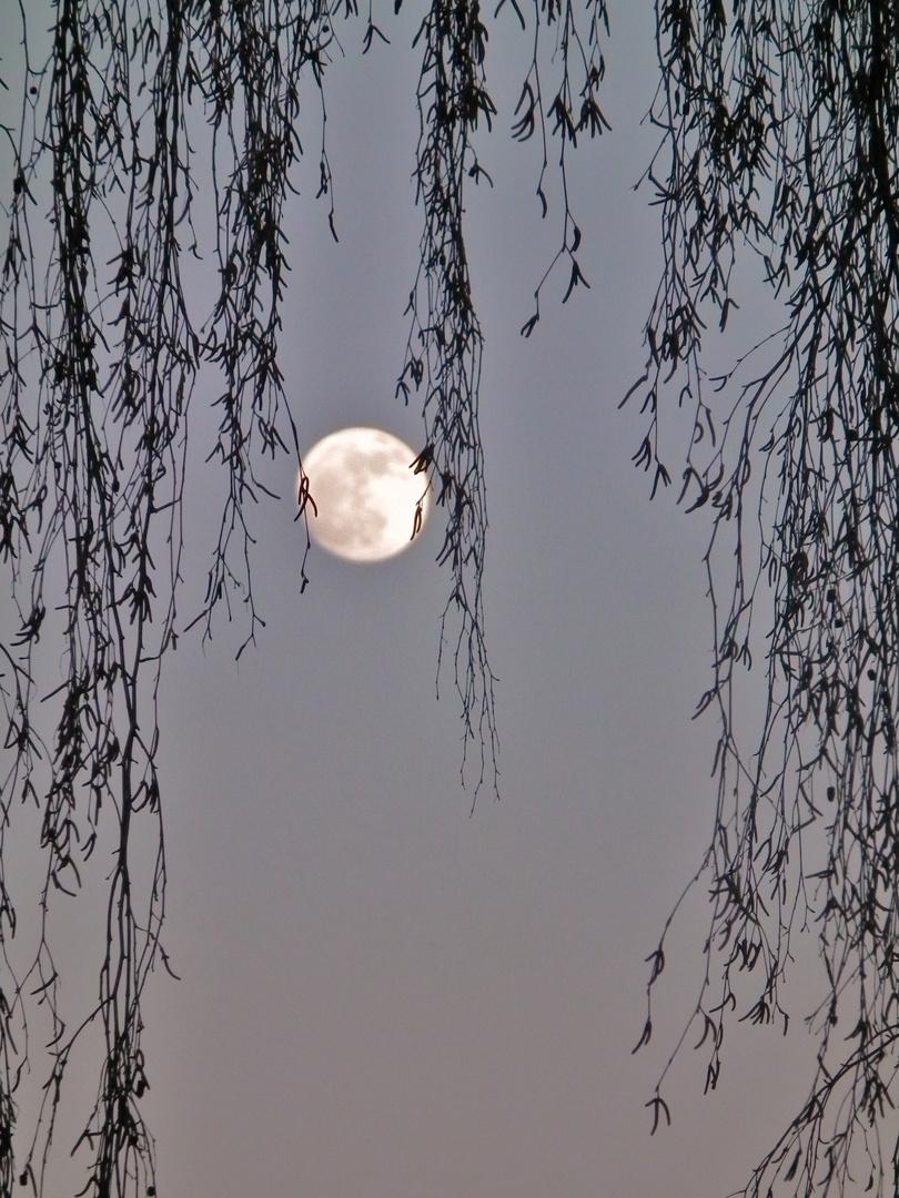 Cheveux de Lune