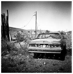 Chevrolet mit Vogel