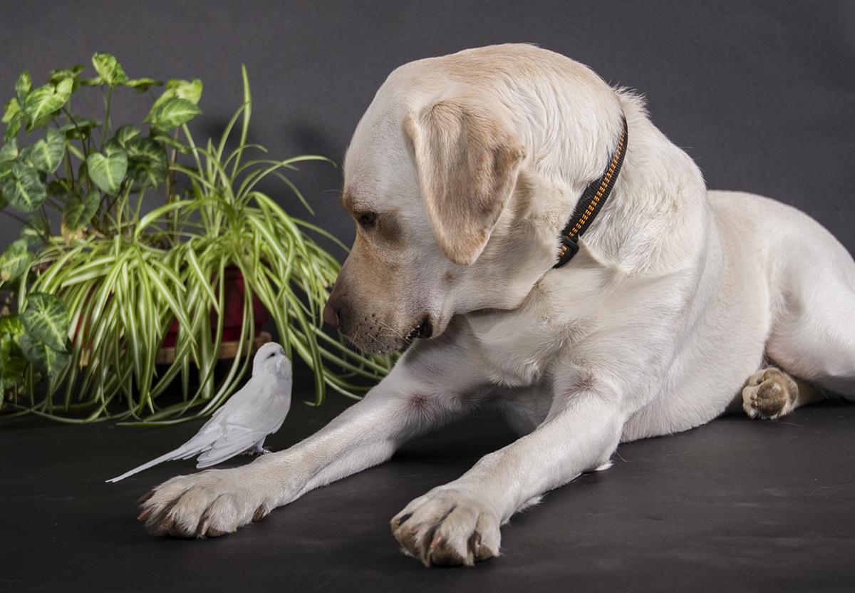 Chico & Goose
