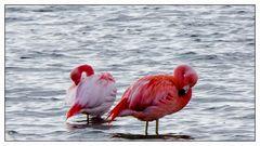 Chiemsee-Flamingos_1