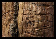 Chiffren für die Nachwelt... - Natur-Kunst ?