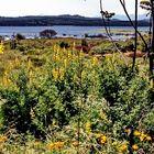 Chile: Nationalpark Lago Peñuelas