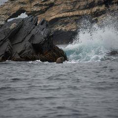 Chile ... sea lions ... no1