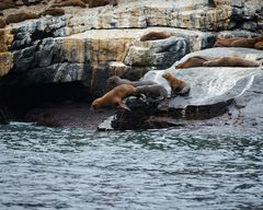 Chile ... sea lions ... no3 ... jump