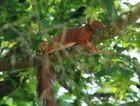 Chillen auf dem Baum an Pfingsten