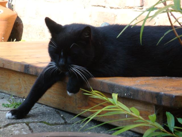 ~Chilling Cat 2~