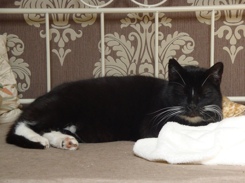~Chilling Cat~