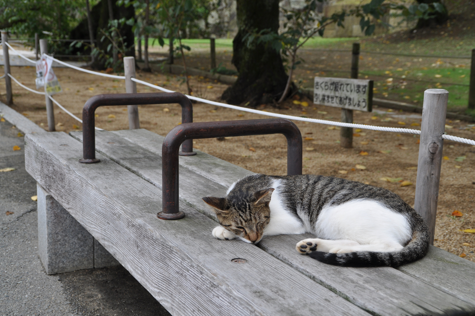 Chilling Cat in Japan