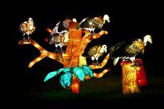 China Light Festival #1