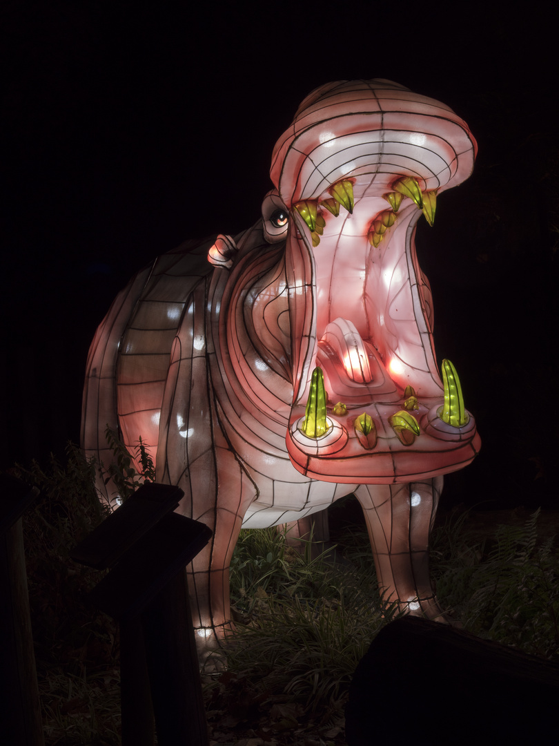 ~ China Light Festival - Nilpferd ~