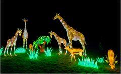 China lights im Kölner Zoo 21