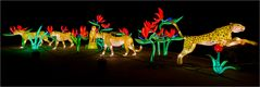 China lights im Kölner Zoo 4