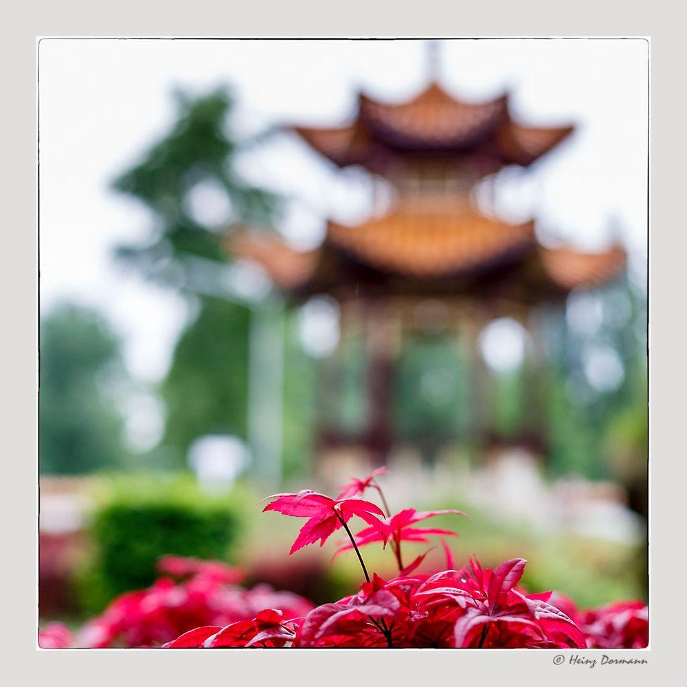 Chinesischer Feuerahorn vor Pagode.