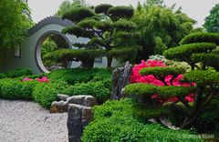 Chinesischer Garten_2