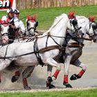CHIO - Kutschrennen - 2014_2