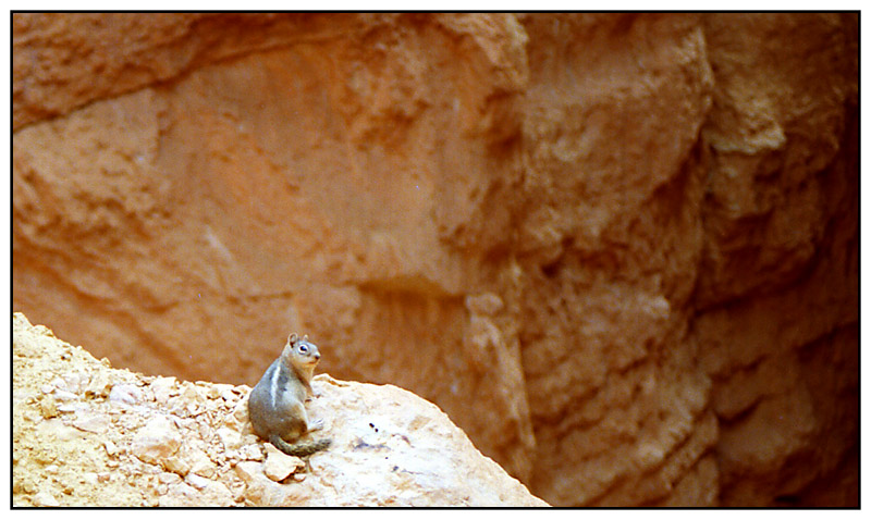 Chipmonk im Bryce Canyon - Utah, USA