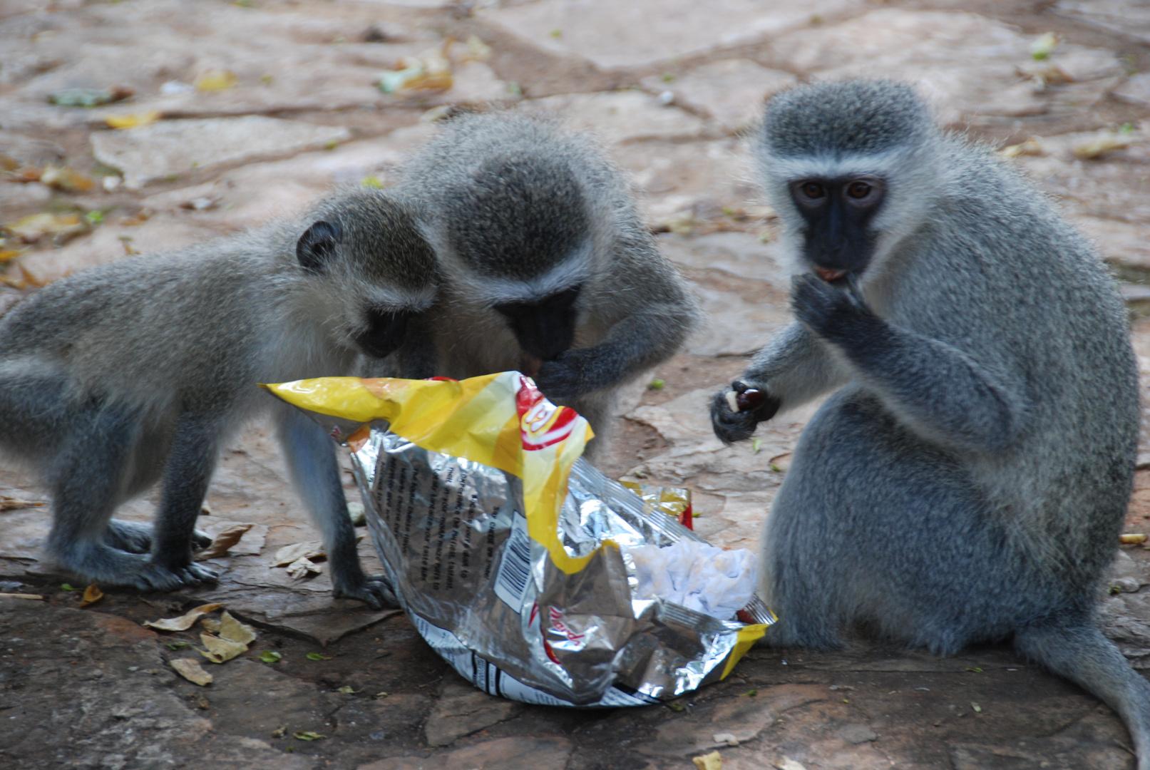 Chips mag jeder!