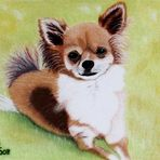 Chiwawa in Pastell