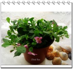 Chloé small flower
