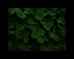 Chlorophyll ****