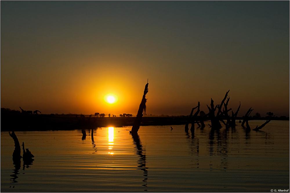 Chobe River im goldenen Licht