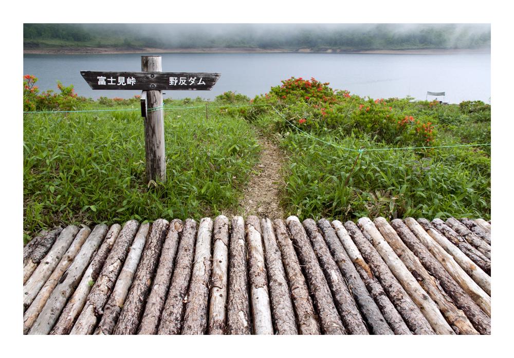 Choose the path