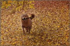 Chorros Herbstrausch II.
