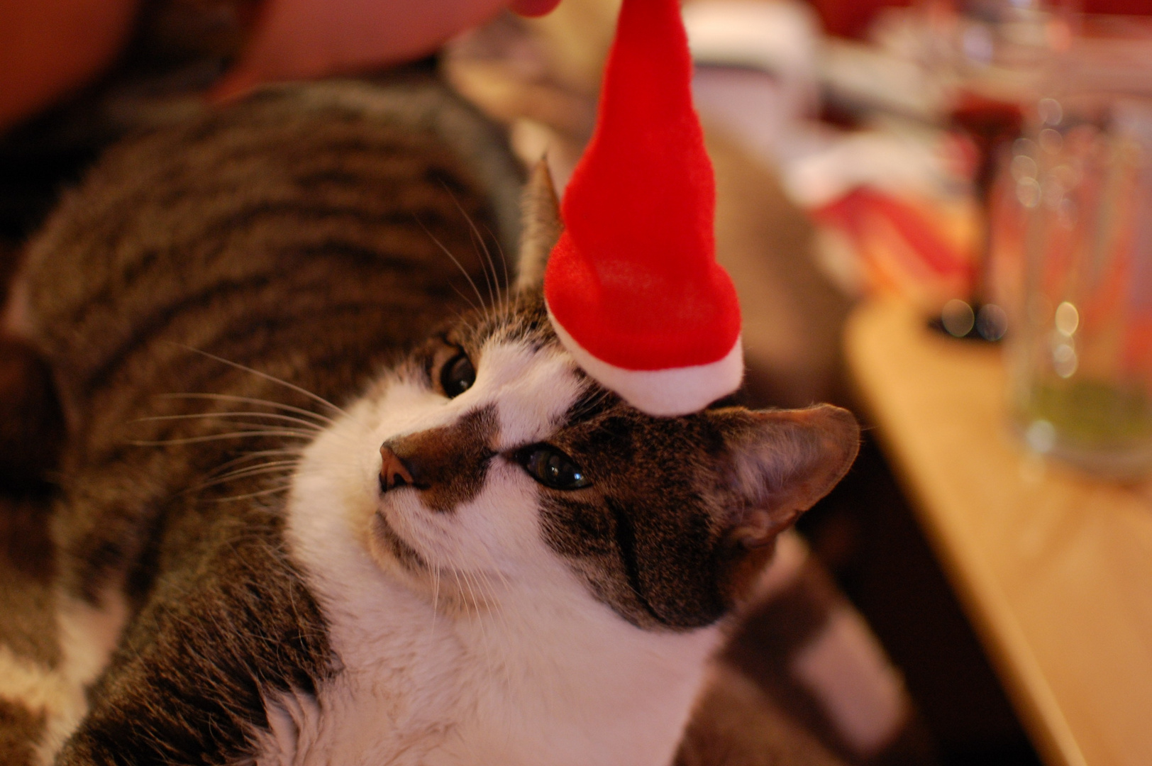 Christmascat Willy