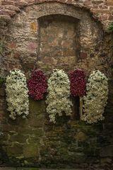 Chrysanthema Lahr 02