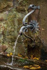 Chrysanthema Lahr 03