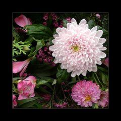 Chrysantheme und mehr...