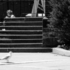church sitters with pigeons