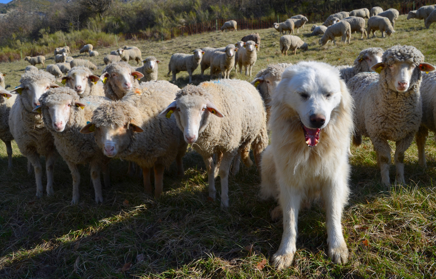 * chut je compte les moutons !! *
