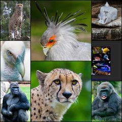 Ciao Zoo-Freunde, danke fürs Reinschauen bei uns. Wir sehen uns im Zoo Münster.