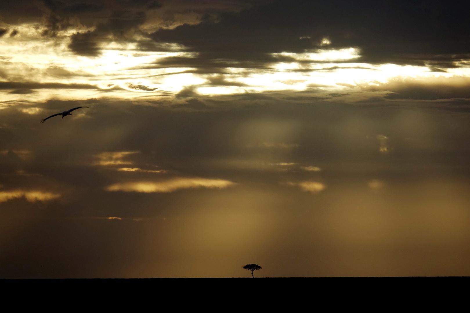 ciel sur la savane