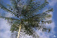 Cienfuegos - Jardin botanique I