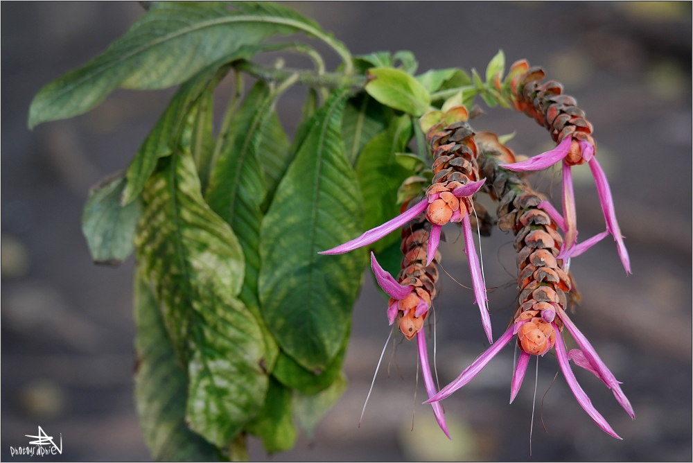 Cienfuegos - Jardin botanique III