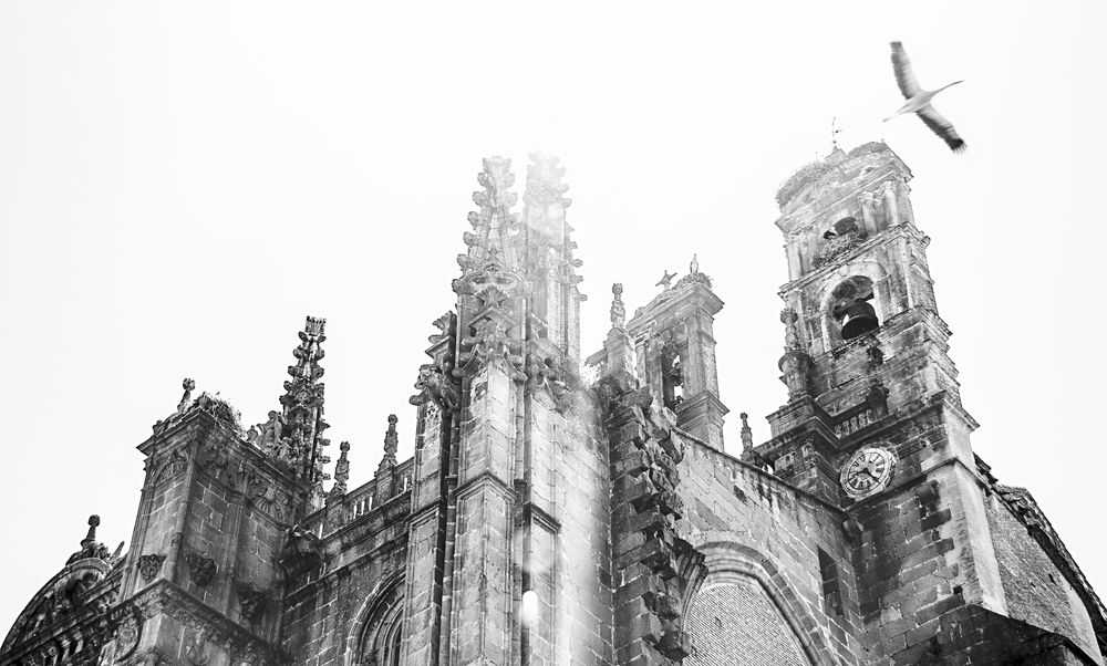 Cigüeña y Catedral