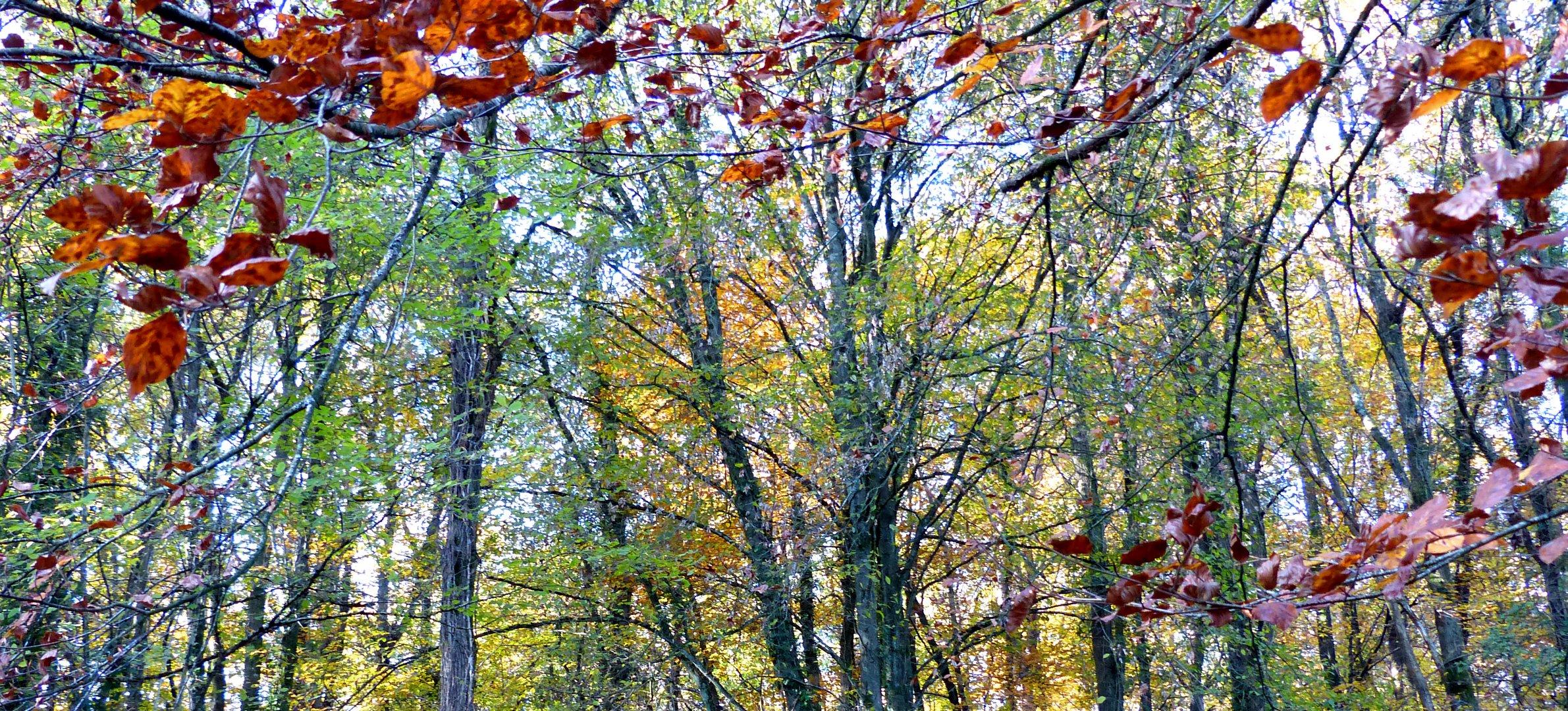 Cimes d'automne.