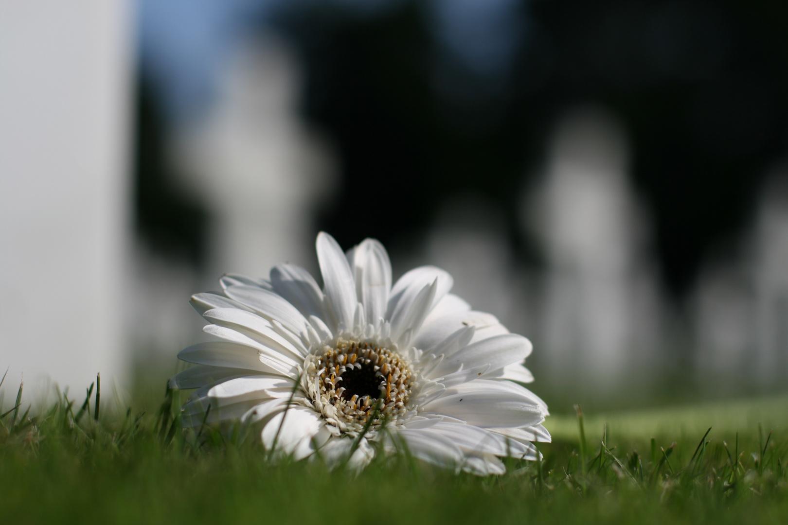 Cimitero Americano - Colleville sur mer