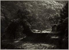 Cinque Terre | Italien 1984