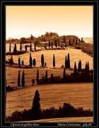 Cipresses in golden dress (For Dushan Xadnadjev)