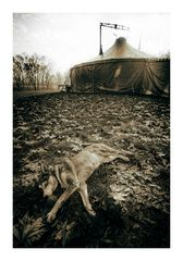 Circus...