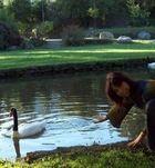 Cisnes....U.de Concepcion Chile......