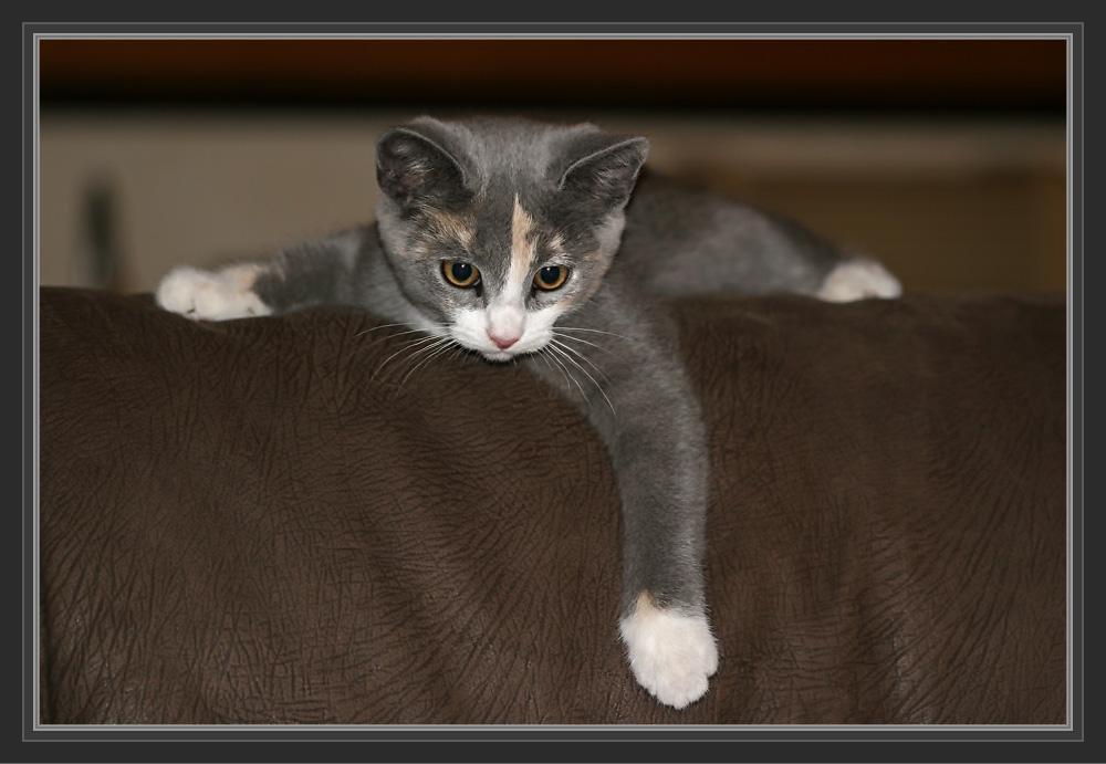 Cissy auf der Couch